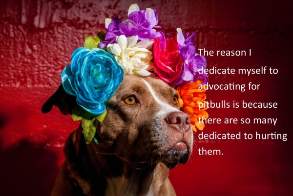 pitbull advocate; pitbull love; end bsl; pitbull awareness