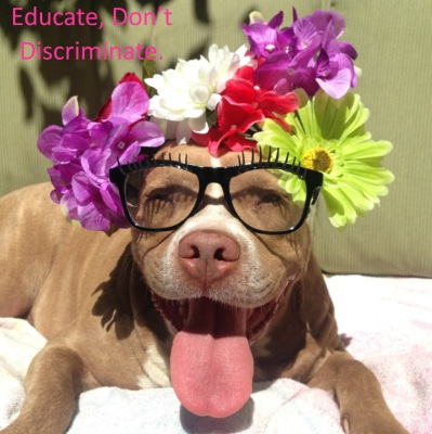 lexy the elderbull; pitbull love; animals in glasses; end discrimination